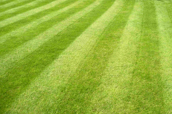 Caring for Lawns During Drought Conditions