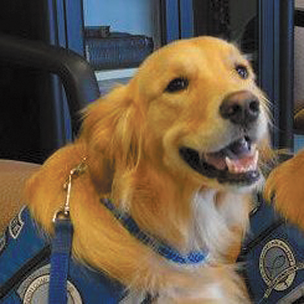 Meet Gracie – Iowa's Only Lutheran Church Charities Comfort Dog