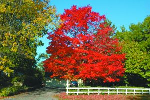 Yard and Garden: Enjoy Fall Colors of the Iowa Trees, Shrubs and Perennials