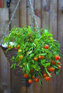 Yard and Garden: Container Vegetable Gardening
